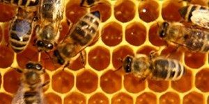 Animal_Sources_Beeswax_Notes