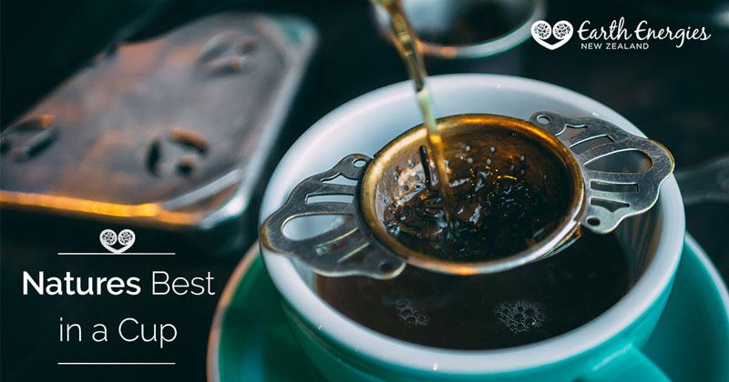 Fresh Kawakawa leaf tea